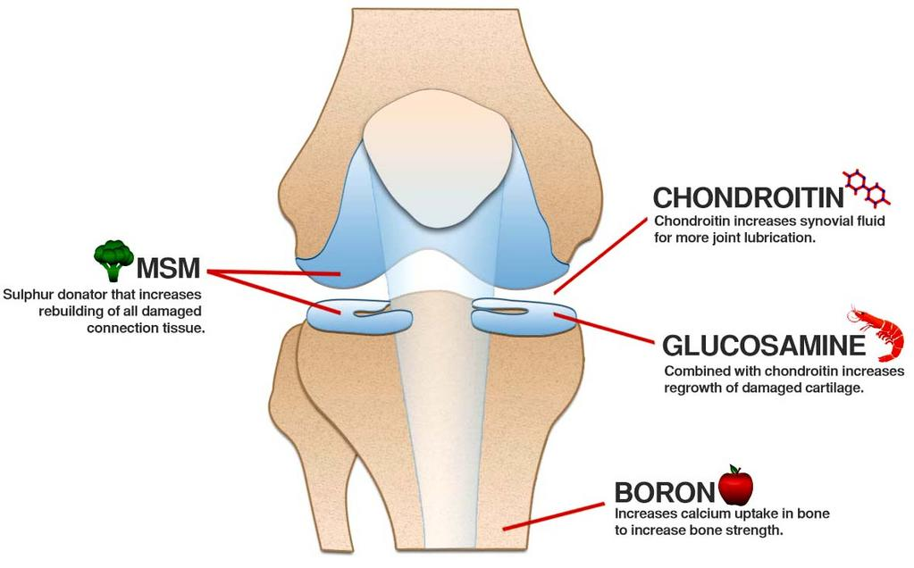 Why Glucosamine with Chondroitin in the Best Joint Supplement UK brand